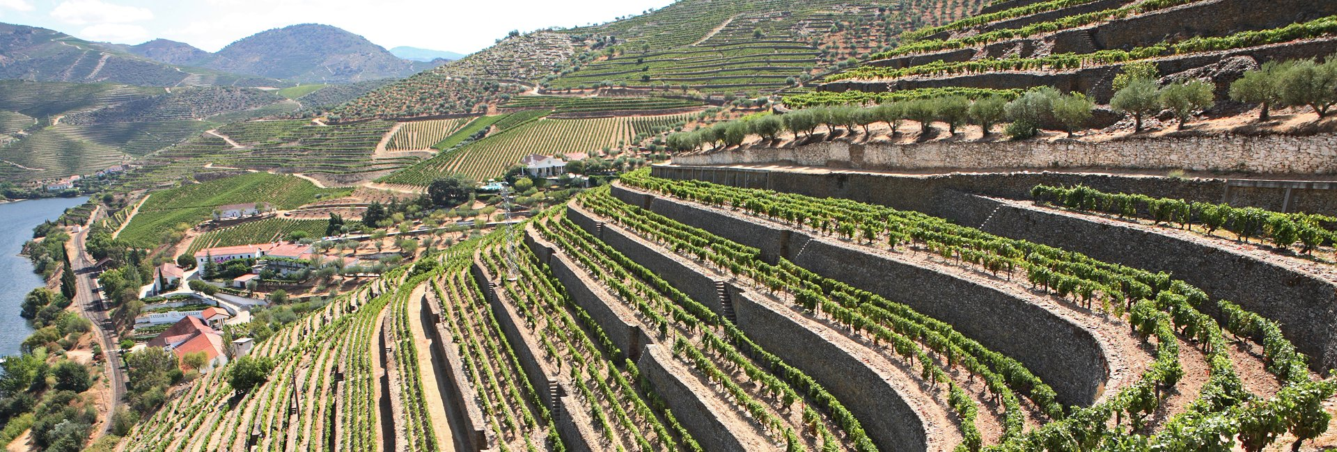 70 Viticultores Associados